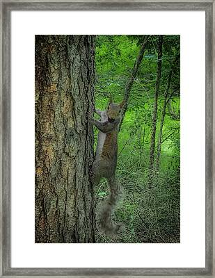 Oh Hi Framed Print