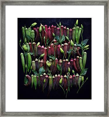 Okra Colors Framed Print