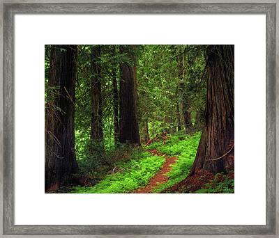 Old Growth Cedars Framed Print by Leland D Howard