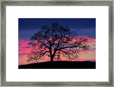 Framed Print featuring the photograph Old Oak Sunset by John Rodrigues