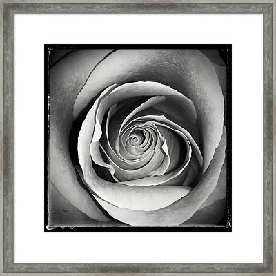 Old Rose Framed Print