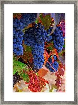 On The Vine II Framed Print
