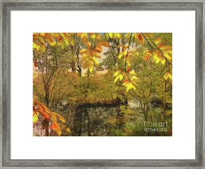 Once A Pond A Time Framed Print