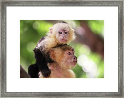 One Of Those Days When You Just Can't Seem To Get The Monkey Off Your Back Framed Print