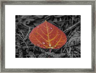 Orange Aspen Leaf Framed Print