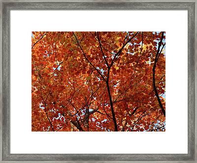 Orange Everywhere Framed Print
