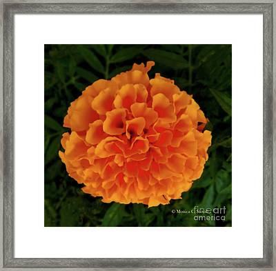 Orange Flowers No. O15 Framed Print