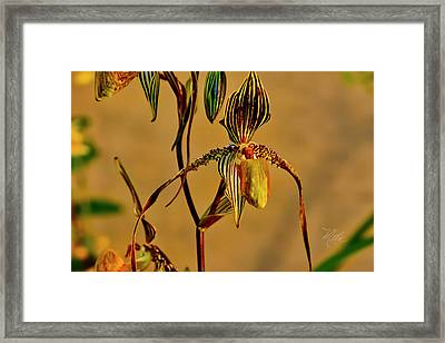 Orchid Study Eight Framed Print