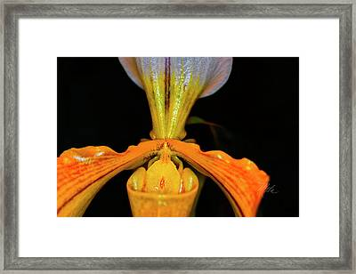 Orchid Study Five Framed Print