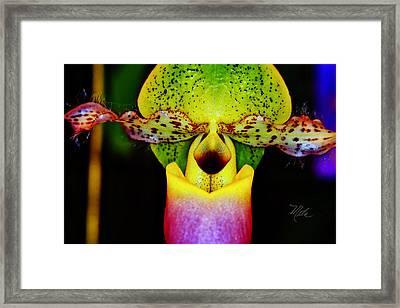 Orchid Study One Framed Print