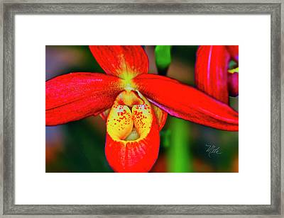 Orchid Study Seven Framed Print