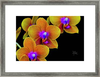 Orchid Study Ten Framed Print