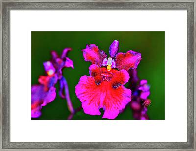 Orchid Study Three Framed Print