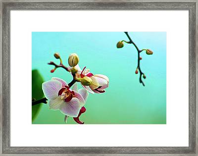 Orchids Out For A Breath Of Fresh Air Framed Print