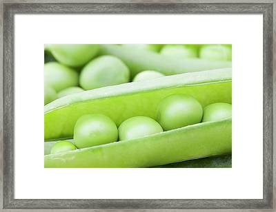 Organic Peas Framed Print by Andrew Dernie