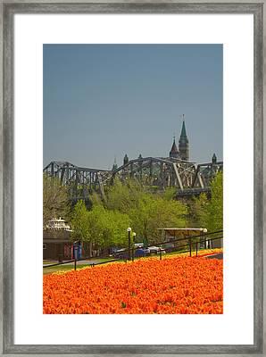 Ottawa Tulip Festival Framed Print