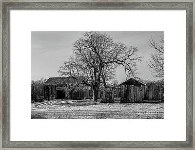 Out In The Barn Yard Framed Print