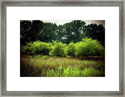 Framed Print featuring the photograph Overgrown by Michelle Wermuth