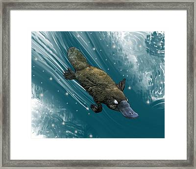 P Is For Platypus Framed Print