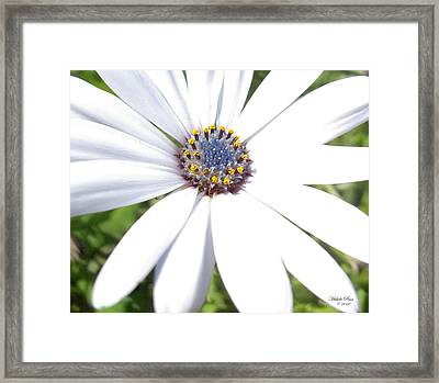 Page 13 From The Book, Peace In The Present Moment. Daisy Brilliance Framed Print