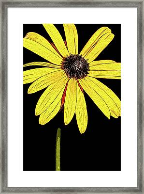 Framed Print featuring the mixed media Painted Black-eyed Susan Portrait by Onyonet  Photo Studios