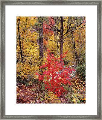 Painted Forest Framed Print by Leland D Howard