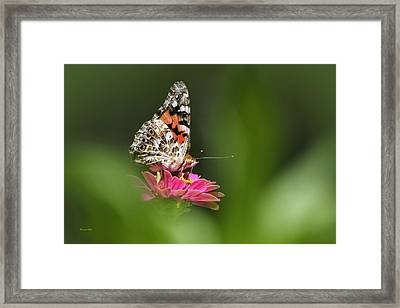 Framed Print featuring the photograph Painted Lady Butterfly At Rest by Christina Rollo