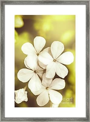 Pale Wildflowers Framed Print