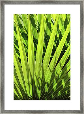 Framed Print featuring the photograph Palm Portrait I by Leda Robertson