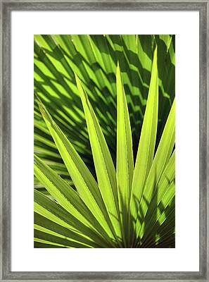 Framed Print featuring the photograph Palm Portrait II by Leda Robertson