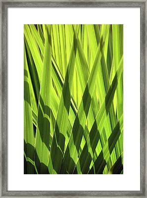 Framed Print featuring the photograph Palm Portrait IIi by Leda Robertson