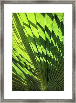 Framed Print featuring the photograph Palm Portrait Iv by Leda Robertson