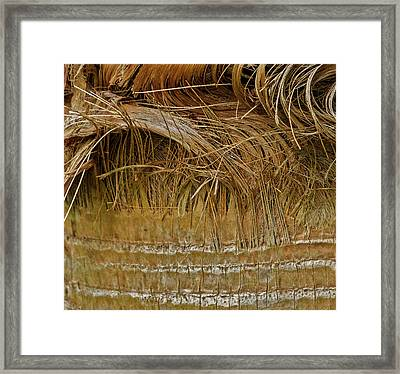 Palm Tree Straw 2 Framed Print