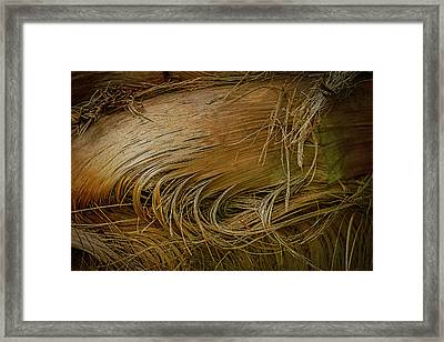 Palm Tree Straw Framed Print