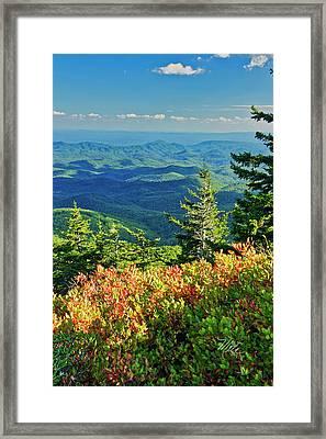 Parkway Tree Framed Print