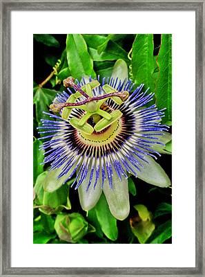 Passion Flower Bee Delight Framed Print
