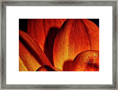 Peach Petals Framed Print