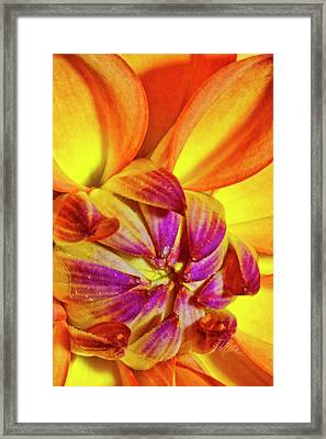 Peach Purple Flower Framed Print