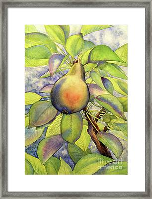 Pear Of Paradise Framed Print