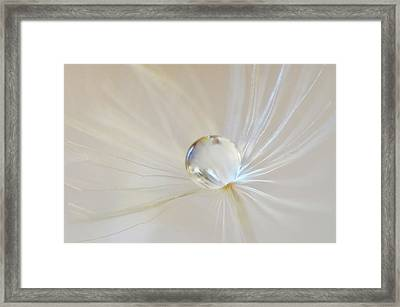 Framed Print featuring the photograph Pearl by Michelle Wermuth