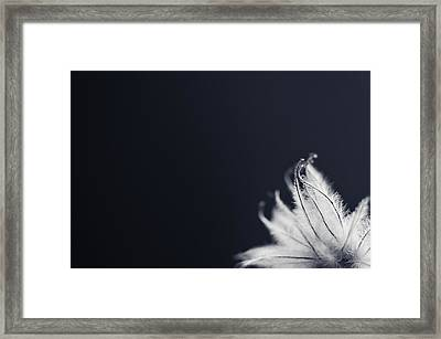 Framed Print featuring the photograph Peek by Michelle Wermuth