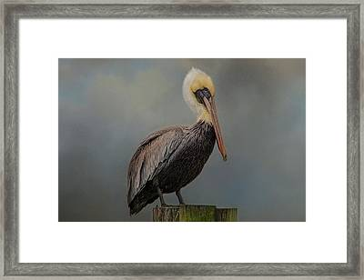 Pelican's Perch Framed Print