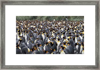 Penguinscape Framed Print