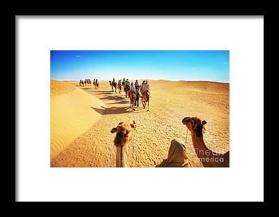Berber Framed Prints