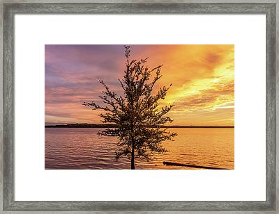 Percy Priest Lake Sunset Young Tree Framed Print