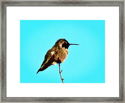 Perfect Posing Framed Print