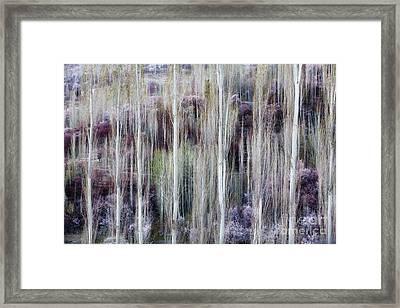Phases Of Spring  Framed Print