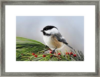 Framed Print featuring the mixed media Pine Chickadee by Christina Rollo