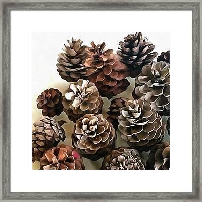 Pine Cones Organic Christmas Ornaments Framed Print