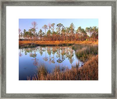 Pines Reflected In Pond Near Piney Framed Print by Tim Fitzharris/ Minden Pictures